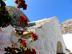 red on white (° cris ° (searching for testimonials :)) Tags: puglia alberobello italia sud south italy trullo tetto rooftop flowers fiori red sky blue colours summer estate verano vacation apulia lespouilles flickraward