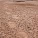 Elephant tracks and waterhole