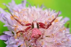 IMG_0009 (Ondřej Michálek) Tags: spider