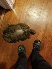05/22/19 (Mandy_moon) Tags: 2019 turtle cooter project365