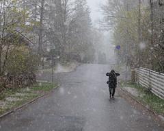 Kevättä ilmassa (Antti Tassberg) Tags: lumisade suomi takatalvi kevät espoo finland scandinavia snow snowfall snowing spring