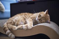 A9__DSC0007_C1 (Bazoka+Cynthia) Tags: alpha cat 小婆 新北市 樹林區 貓