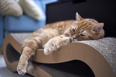 A9__DSC0006_C1 (Bazoka+Cynthia) Tags: alpha cat 小婆 新北市 樹林區 貓