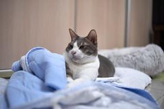 A9__DSC0002_C1 (Bazoka+Cynthia) Tags: cat 宇彬 小婆 新北市 樹林區 貓