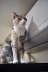 A9__DSC0031_C1 (Bazoka+Cynthia) Tags: cat pupu 小婆 新北市 樹林區 貓