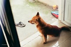000029570016 (vuphone0977) Tags: vietnam fujifilm200 takuma 55f18 saigon sàigòn streetlife mylife cafe2fone