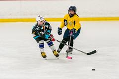 DSC_6537.jpg (Flickr 4 Paul) Tags: hornets pondhockey chillernorth
