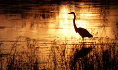 P1110114 (kchocachorro) Tags: sun sunset photography phothographer lake photo shadows silohuette silueta nature naturephoto naturephotography naturewild naturewildlife flickrnature flickrphoto