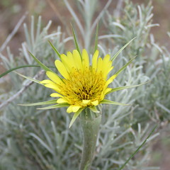 flower (hounddiggity) Tags: albuquerque newmexico flower yellow