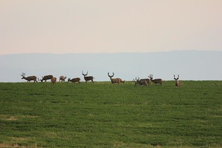 Wyoming Elk Hunt and Mule Deer Hunt 42