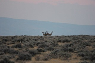 Wyoming Elk Hunt and Mule Deer Hunt 31