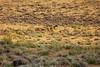 Wyoming Elk Hunt and Mule Deer Hunt 29