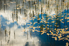 Floating in the sky (tonguedevil) Tags: outdoor outside countryside spring nature lake water ripples reflections plants pond leaves sky clouds floating colour light shadows sunlight horsetail bollihope weardale fuji