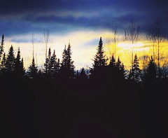 (Kościuszko) Tags: rustic iphotography iphoto iphone hiking hike sticks whitemountains newhampshire mountains mountain woods country sunset clouds sky conifers pine trees tree silhouette
