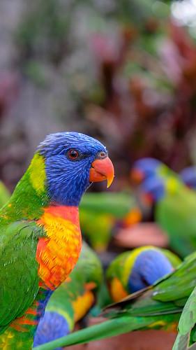 Colourway Buddy