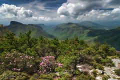 Linville Gorge from Hawksbill Mountain (Reid Northrup) Tags: rrs nature carolinarhododendrons clouds flower forest hawksbillmountain landscape linvillegorge nikon northcarolina reidnorthrup rhododendrons rocks rugged trees tablerock