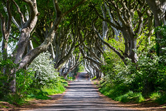 Game of Thrones Kings Road (Martyn Cartledge / www.aspphotography.net) Tags: beautiful darkhedges gameofthrones got kingsroad road trees wwwaspphotographynet manchester uk asp photography