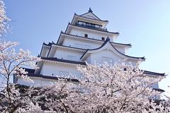 鶴ヶ城と桜 Tsuruga Castle with Cherry Blossoms (ELCAN KE-7A) Tags: 日本 japan 福島 fukushima 会津若松 aizuwakamatsu 染井吉野 桜 サクラ cherry blossom ペンタックス pentax k3ⅱ 2019