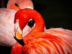 (mgschiavon) Tags: animal colors zoo california bird portrait nature