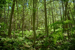 _DSC1869 (terryw002) Tags: forest nature beautyinnature forestphotography zeiss zeissmilvus green trees sunlight peaceful