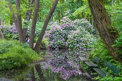 DSC06313 (Photodendron) Tags: ilce7rm3 tiergarten