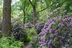 DSC06308 (Photodendron) Tags: ilce7rm3 tiergarten
