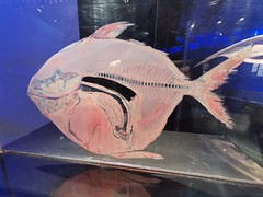 Animals Inside Out - Manitoba Museum of Man and Nature (TheSamuelYears) Tags: animalsinsideout touringexhibit animal animals museum winnipeg wpg canada manitobamuseumofmanandnature manitobamuseum manitoba indoors indoor huawei huaweip30pro fish exhibit wateranimal