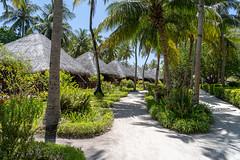 A7303717_s (AndiP66) Tags: bandos nordmaléatoll northmaleatoll kaafu atoll insel island malediven maldives indischerozean indianocean märz march 2019 sony sonyalpha 7markiii 7iii 7m3 a7iii alpha ilce7m3 sonyfe24105mmf4goss sony24105mm 24105mm emount sel24105g andreaspeters