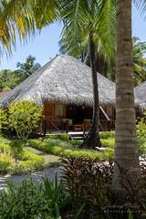 A7303712_s (AndiP66) Tags: bandos nordmaléatoll northmaleatoll kaafu atoll insel island malediven maldives indischerozean indianocean märz march 2019 sony sonyalpha 7markiii 7iii 7m3 a7iii alpha ilce7m3 sonyfe24105mmf4goss sony24105mm 24105mm emount sel24105g andreaspeters