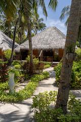 A7303705_s (AndiP66) Tags: bandos nordmaléatoll northmaleatoll kaafu atoll insel island malediven maldives indischerozean indianocean märz march 2019 sony sonyalpha 7markiii 7iii 7m3 a7iii alpha ilce7m3 sonyfe24105mmf4goss sony24105mm 24105mm emount sel24105g andreaspeters