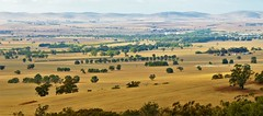 Fields, Farmland and Flinders Ranges, via Laura, South Australia (Red Nomad OZ) Tags: landscape farm farmland agriculture rural country countryside ranges flindersranges southernflindersranges outdoor fields midnorth australia southaustralia laura lauralookout