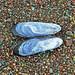 Mytilus californianus (California mussel shell) (Rodeo Beach, Marin Peninsula, California, USA)
