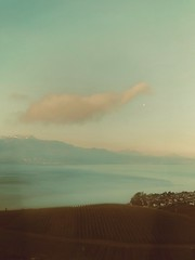 •a cloud• (c.dna) Tags: bytrain train bytrai fribourg lausanne commuter cff sbb shotbytrain wineyard cloud lémanlake lavaux unesco switzerland
