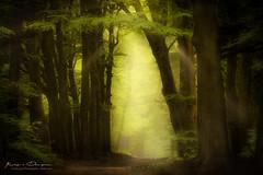 Further in Time (keesvandongen) Tags: heather sunset sunrise dusk dawn naturephotography nature mood light sunlight warm mist misty fog foggy water channel landscape landscapephotography skyscape sky night keesvandongen keske thenetherlands trees woods tree wood twilight forest