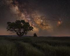 Guardian of the Galaxy (willblakeymilner) Tags: nikon fornax galaxy milkyway tree oxfordshire uk england night nightscape nature stars sigma art detail