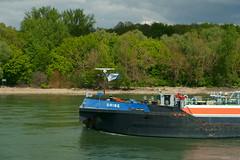 TMS BRISE (Lutz Blohm) Tags: tmsbrise tankschiff mannheim gkm groskraftwerkmannheim rheinkilometer419 binnenschifffahrt binnenschiffe gütermotorschiff rheinzutal sonyfe24105mmf4goss sonyalpha7aiii