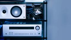 'Serious About Sound' (Jonathan Casey) Tags: cat tabby hifi sound speaker amp nikon d850 135mm f18 art sigma jonathan casey photography