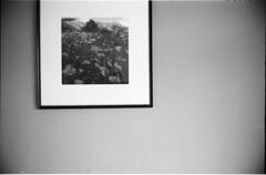 klar ist das Mohn (fluffisch) Tags: fluffisch zuhause leica leicam6 summiluxm35f14 preasph summilux 35mm f14 rangefinder messsucher analog film adox silvermax