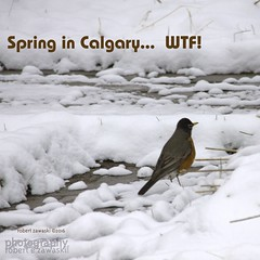 Spring?? (zawaski -- Thank you for your visits & comments) Tags: alberta beauty 4hire serves lovwparis noflash canada naturallight revisit zawaski©2019 calgary love ambientlight paris lovepeace 2007 editing canonefs55250mmf456isstm zawaski finephotography photog ambieantlight