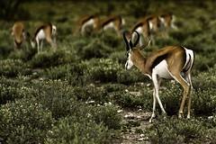 Gelson_3 (Clube do Fotógrafo de Caxias do Sul) Tags: gelsonrocha namíbia animais concursonature18 concursonovember concursopara concursotoronto18 concursoseleção concursoasisan concursobicontinental natureza top áfricadosul