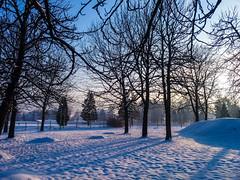 (Jelena1) Tags: snow sneg snö schnee nieve neige neve sneeuw winter zima invierno hiver vinter inverno tree trees drvo drvece arbre árbol baum träd boom albero priroda nature naturaleza natur natuur natura sky nebo ciel cielo himmel hemelgewelf serbia srbija serbie serbien servië balkans