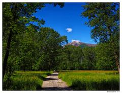 passeggiata bucolica (Maurizio Badà) Tags: verde campagna alberi prato vegetazione oasi wwf bosco