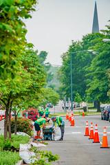 2019.05.04 Vermont Avenue Garden Blooms and Work Party, Washington, DC USA 01806
