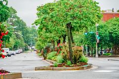 2019.05.04 Vermont Avenue Garden Blooms and Work Party, Washington, DC USA 01982
