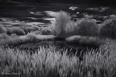 The Start of Summer (JustAnotherCanonOperator (JACO)) Tags: pond trees summer landscape infrared water lake darksky clouds