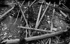 Untitled (janeseibertphotography) Tags: abstract blackandwhite black white blackandwhitephotography monocrhomatic monochrome tree trees fallen firedamage fire yellowstonenationalpark yellowstone