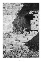 Forgotten Bricks (Rory Prior) Tags: 35mm calderdale hebdenbridge rollei35se spring yorkshire bw bricks film fomapan100 ruin