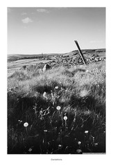 Dandelions (Rory Prior) Tags: 35mm calderdale hebdenbridge oldtown rollei35se spring yorkshire bw countryside dandelions film fomapan100 landscape