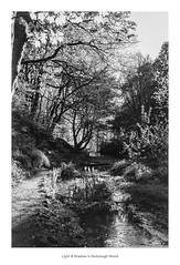 Light & Shadow in Nutclough Wood (Rory Prior) Tags: 35mm calderdale hebdenbridge nutcloughwoods rollei35se spring yorkshire bw film fomapan100