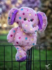 Pink Elephants In the Park (REA // Photography) Tags: abandoned centralpark child children childstoy elephant lost nyc newyorkcity park pink polkadot spring stilllife stuffedanimal stuffedtoy toy